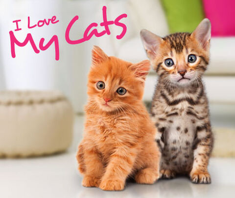I Love My Cats